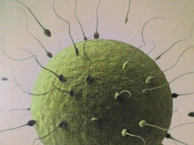 IVF – Cost, Facts, Success Rates, Risks | Infertility Aide