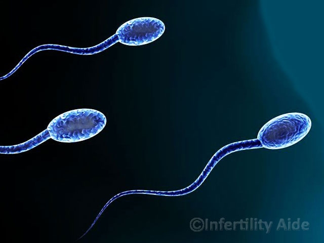 Restore sperm generation in cancer patients