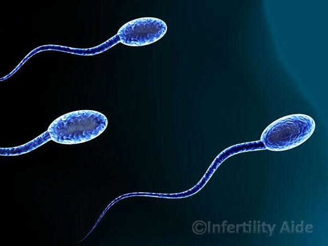 Restore sperm generation in cancer patients